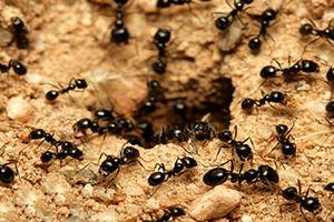 فیلم/ کار گروهی را از مورچهها یاد بگیریم