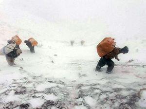 کولبران در ارتفاعات سرد اورامان