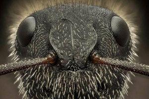 عکس/ نمای نزدیک از صورت مورچه