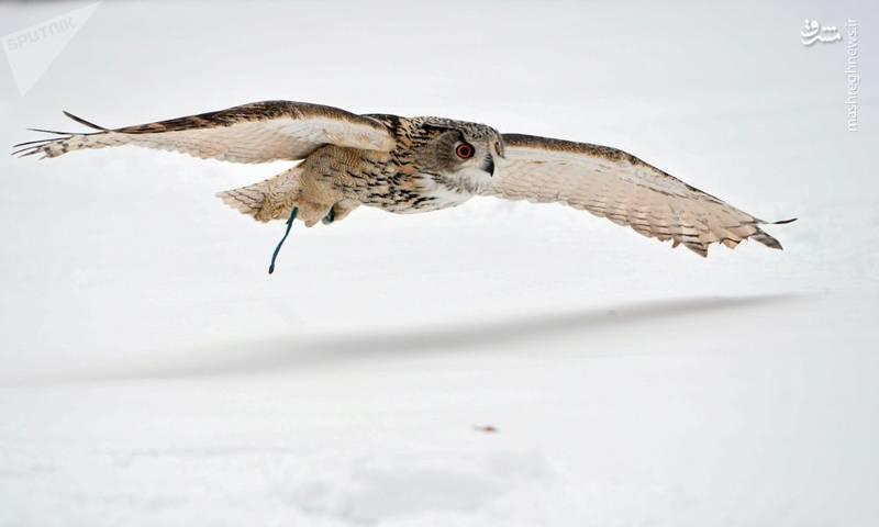 محافظت پرندگان شکاری از کاخ کرملین