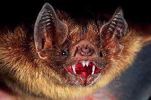 شفابخشی بزاق خفاش؛ از شایعه تا واقعیت +عکس