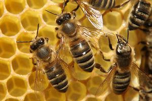 فیلم/ وقتی زنبورها جا خوش میکنند