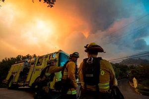 عکس/ آتشی که ۸۵۰۰ آتشنشان آن را خاموش میکنند