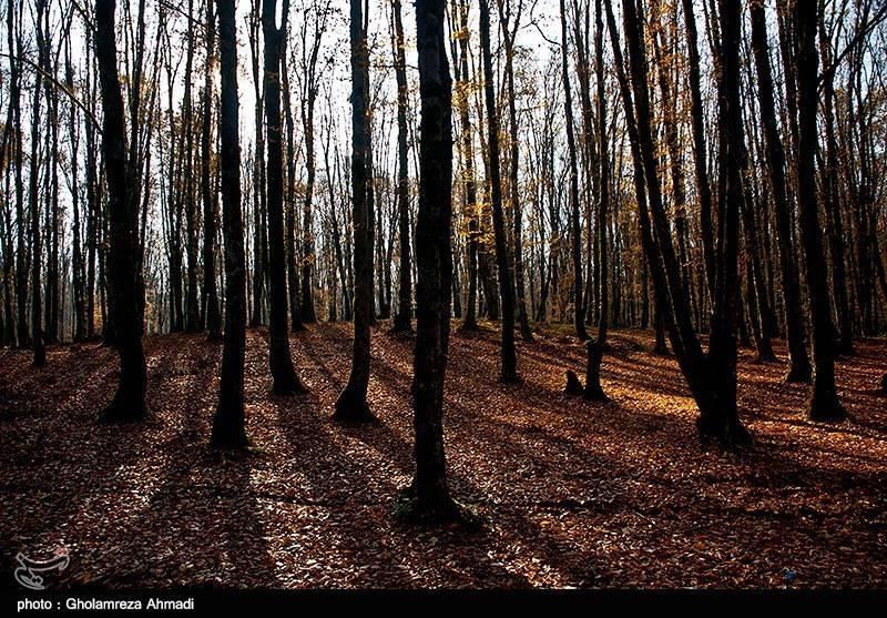 پاییز در جنگل بهشهر