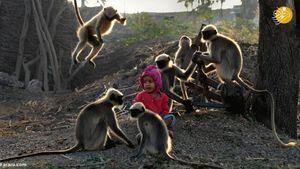 عکس/ دوستی جالب پسربچه هندی با میمونها!