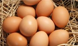 وعده مسئولان درباره قیمت تخم مرغ محقق نشد