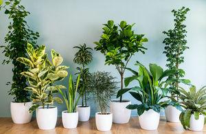 گیاهان آپارتمانی عالی برای افراد تنبل +عکس