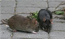 از شایعه تا واقعیت حمله موشهای آدمخوار به تهرانیها