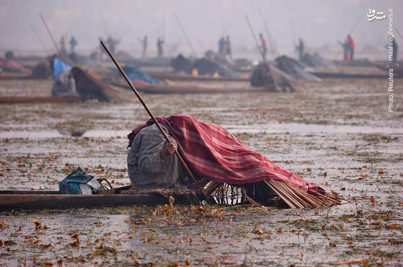 روش خاص ماهیگیران در سرینگار کشمیر