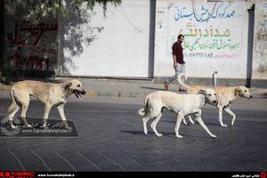 عکس/ سگهایی که آزادانه میچرخند