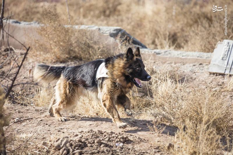 2159325 - مانور سگهای زندهیاب هلال احمر