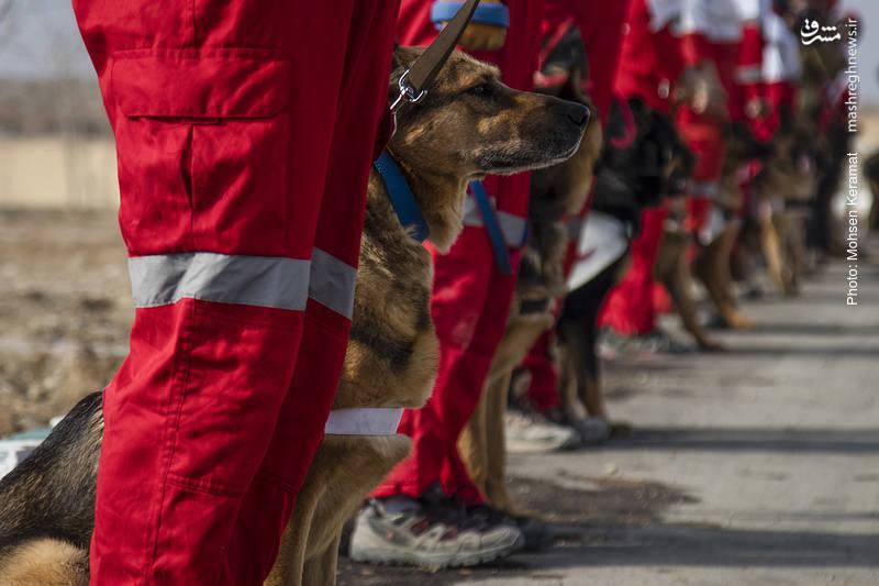 2159334 - مانور سگهای زندهیاب هلال احمر