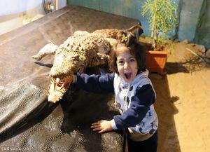 عکس/ اولین پارک کروکودیل خاورمیانه