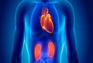 راهکارهای پیشگیری از بیماری کلیوی را بشناسیم