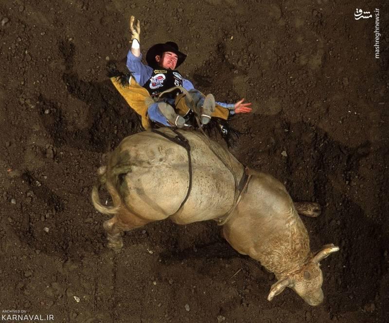 سقوط   آمریکا/کُری مکفدن (Cory McFadden) در جام گاو سواری باد لایت ۲۰۰۱ ( ۲۰۰۱ Pro Bull Riders Bud Light Cup) از روی گاو خود به پایین افتاد. این حادثه در شهر آناهایم (Anaheim) ایالت کالیفرنیا به وقوع پیوست.