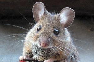 فیلم/ دستبرد موش ها به بانک!