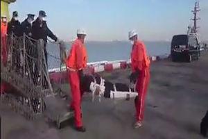 فیلم/ ورود دو پیکر کشف شده در نفتکش به شانگهای