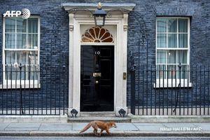 لندن از تحریم جدید واشنگتن علیه مسکو استقبال کرد