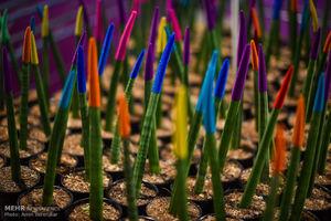 تصاویر زیبا از نمایشگاه گل و گیاه شیراز