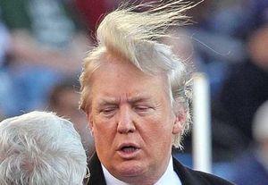 ترامپ «به اندازه گاو هم نمیفهمد»/ راز موهای «خاص» رئیسجمهور آمریکا چیست +عکس و فیلم