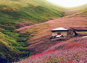 عکس/ طبیعتی رویایی در گیلان