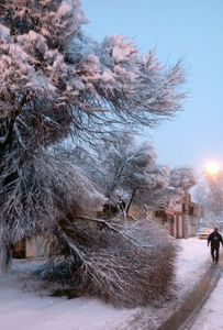 عکس/ خسارات برف به درختان تهران