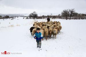 عکس/ صبح برفی کودک روستایی!