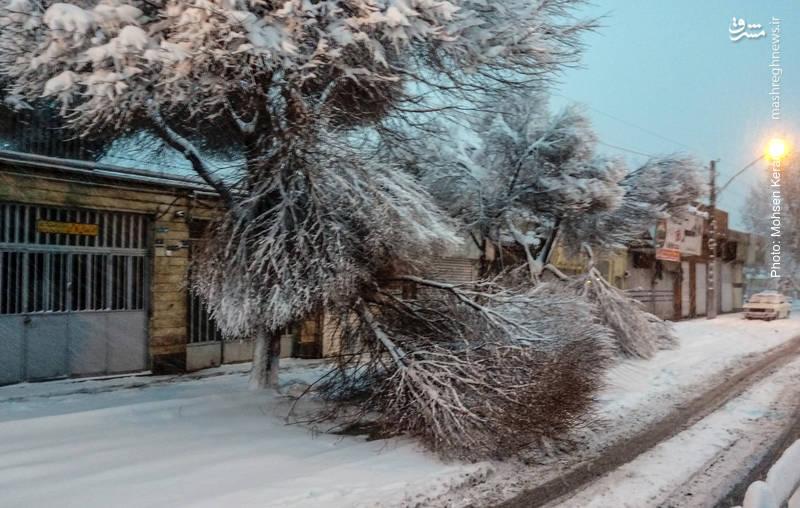 شکسته شدن درختان بعلت بارش سنگین برف در تهران