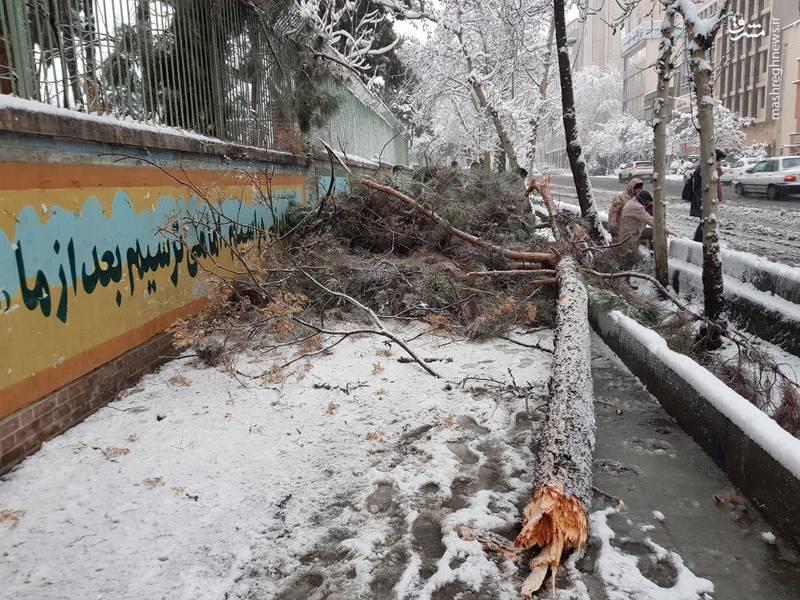 شکسته شدن درختان خیابان طالقانی بعلت بارش سنگین برف در تهران