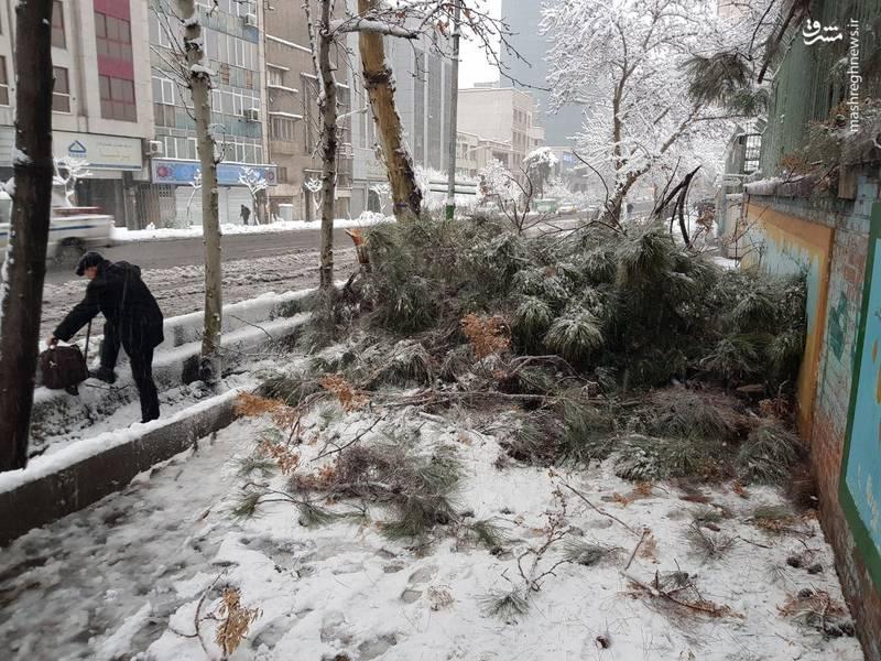 شکسته شدن شاخه درختان خیابان پایتخت