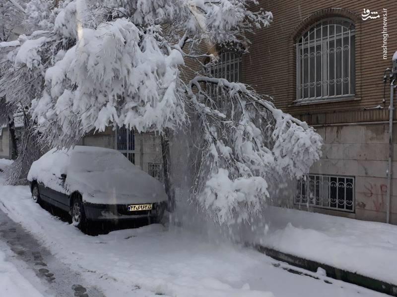 شکسته شدن شاخه درختان پایتخت به علت بارش برف شدید