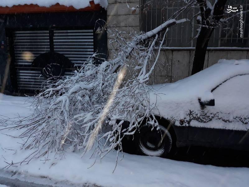 شکسته شدن شاخه درخت و افتادن آن روی خودرویی که پارک شده است.