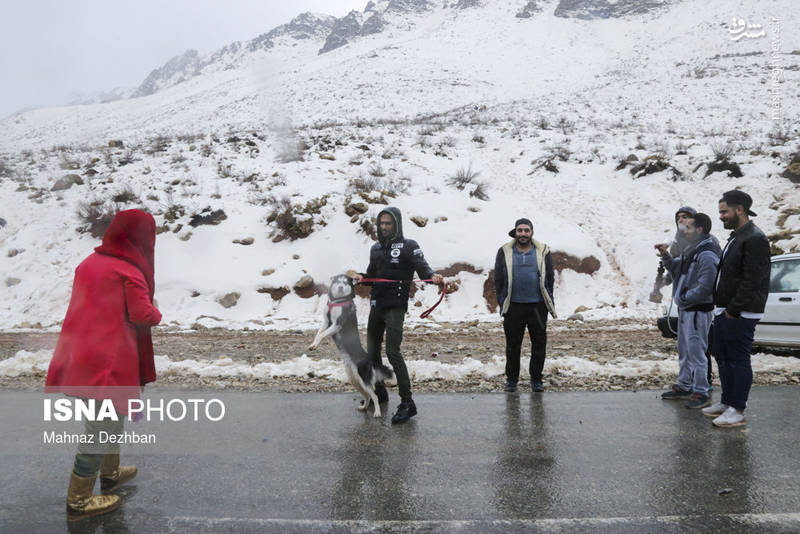 بارش برف در تاراز خوزستان