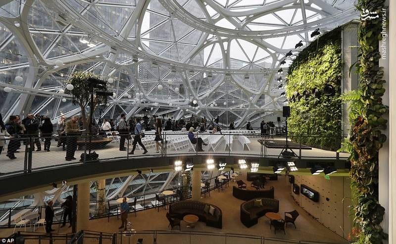 بیشتر این گیاهان از اکوسیستم جنگل های ابری انتخاب شده اند