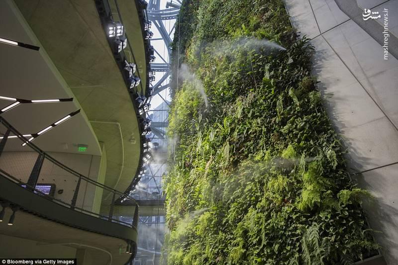 در این گنبدها بیش از ۴۰ هزار گیاه از ۴۰۰ گونه مختلف کاشته شده اند
