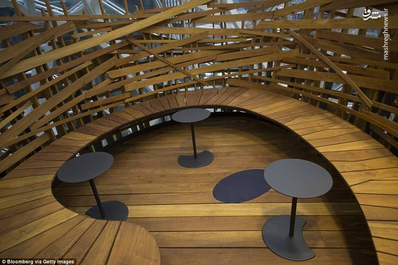 میان این جنگل کوچک اتاق های کنفرانس و فضاهای اداره ساخته شده اند