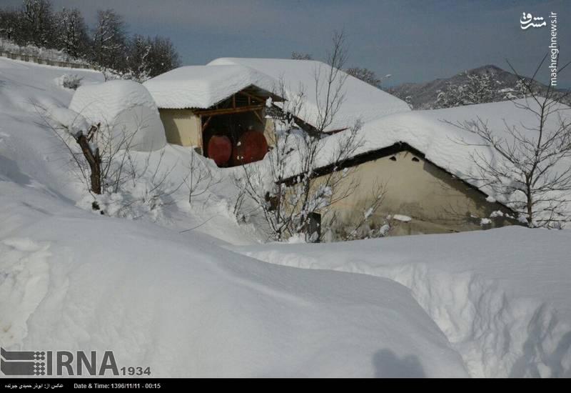 بارش برف زمستانی دیلمان را سفیدپوش کرد