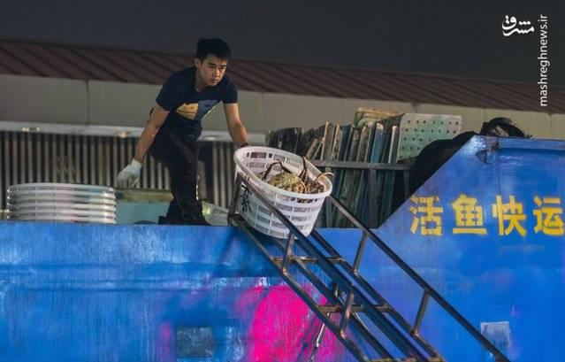 انتقال مواد غذایی دریایی از داخل کامیونها که از سمت رودخانه گوانگژو برای فروش به سمت بازار میآورند