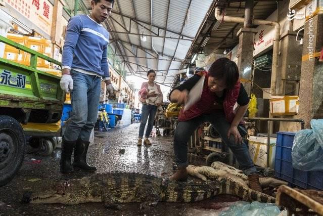 یک زن در حال تکه تکه کردن کروکودیلها