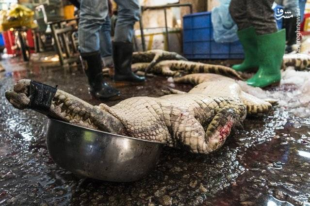 یکی از بزرگترین جاذبه های گردشگران و خریداران در بازار، تمساح است