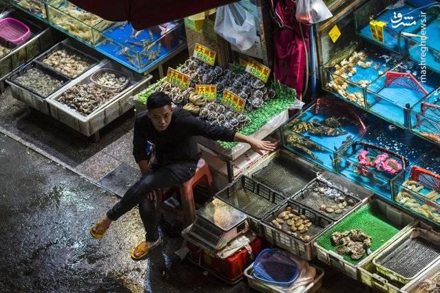 نمایی متفاوت از تنوع محصولات غذایی دریایی یک فروشگاه