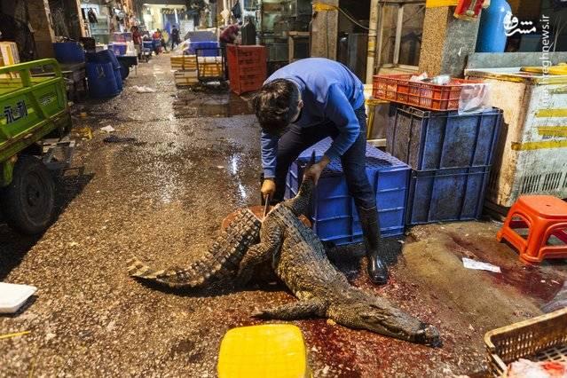 یک مرد در حال تکه تکه کردن کروکودیلها