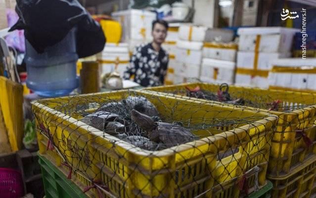 فروشندگان لاک پشت فروش منتظر مشتریان در بازار غذاهای دریایی گوانگژو