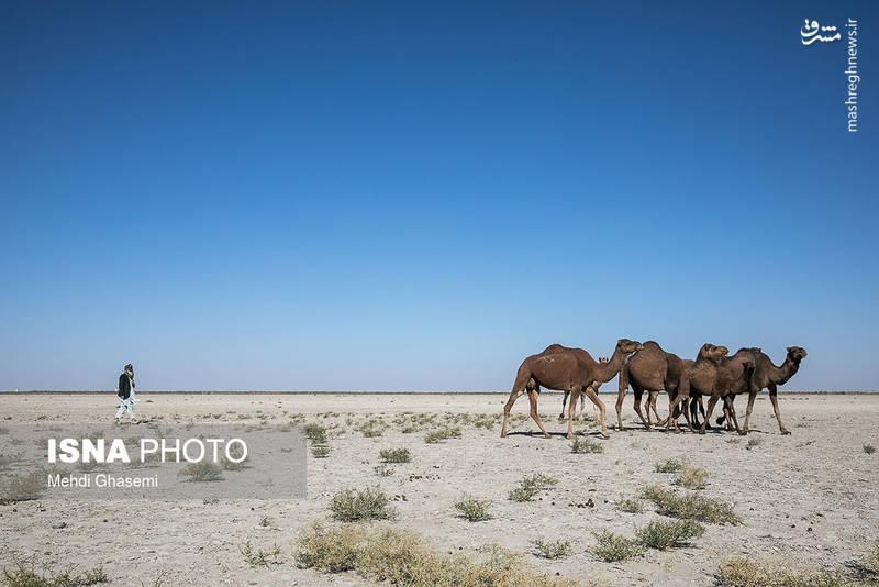 سیستان سرزمینی در شمال استان سیستان و بلوچستان و شرق ایران است.