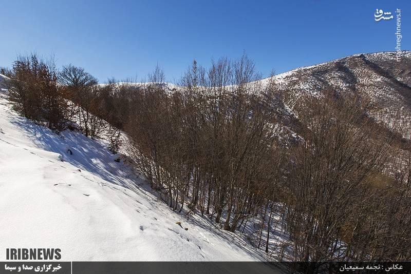 پارک ملی گلستان یا جنگل گلستان، منطقهٔ حفاظت شدهای در شرق استان گلستان و غرب استان خراسان شمالی است.