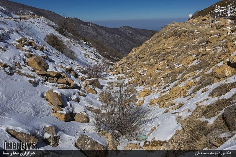 این منطقه۱۳۵۰ گونهٔ گیاهی و ۳۰۲ گونهٔ جانوری، از جمله نیمی از گونههای پستانداران ایران را در حدود ۹۰۰ کیلومتر مربع مساحت خود جای دادهاست
