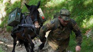 عکس/ الاغ و قاطرهای ارتش آلمان