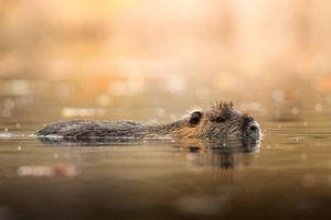 عکس/ آبتنی موش بیور در چک