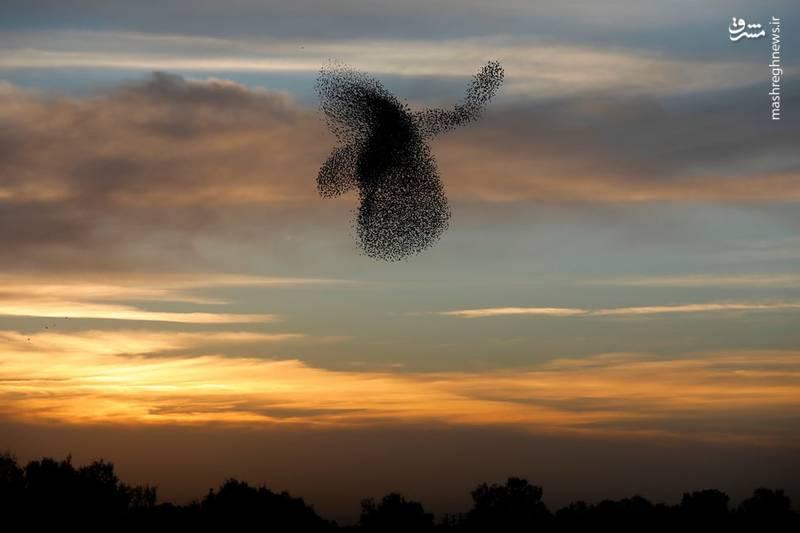 پرواز جالب کبوترها