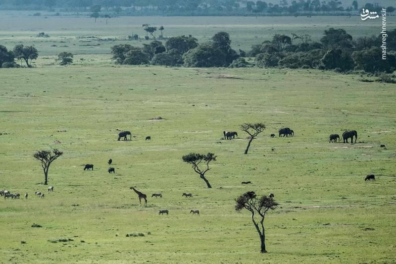 جنوب کنیا